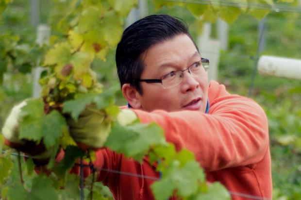 A Forty Hall vineyard volunteer - image: Capel Manor College