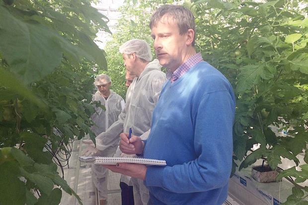 Kempkes: researcher on winter light cucumber project