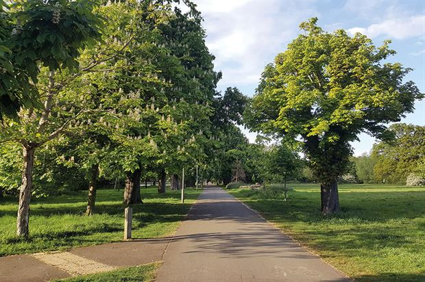 Tooting Bec Common: arboricultural experts brought in by both sides in row over avenue of horse chestnut trees - image: Candida Jones