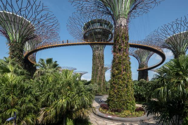 The Gardens By the Bay supertrees. Image: Grant Associates