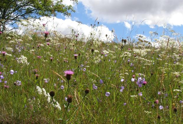 Perennial meadows have been introduced by several councils. Image: Richard Smith