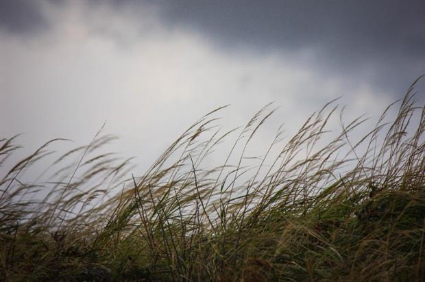 Grasses. Image: Morguefile