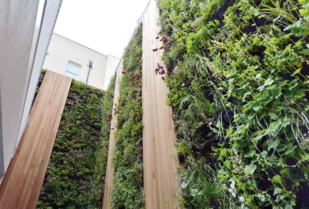 Living wall project. Image: Scotscape