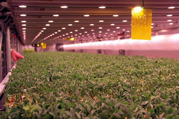 GrowUp Urban Farms: crops such as pea shoots grown under LEDs to specific light recipes in the hydroponic unit - image: HW