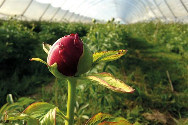FloraBritain: group offers help to independent florists - image: Florismart