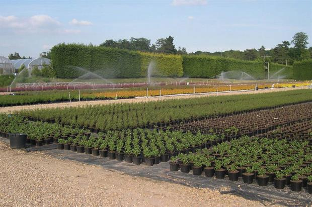 Nurseries: securing water supplies at a price that makes business sense and irrigating efficiently are two of the major challenges - image: John Adlam