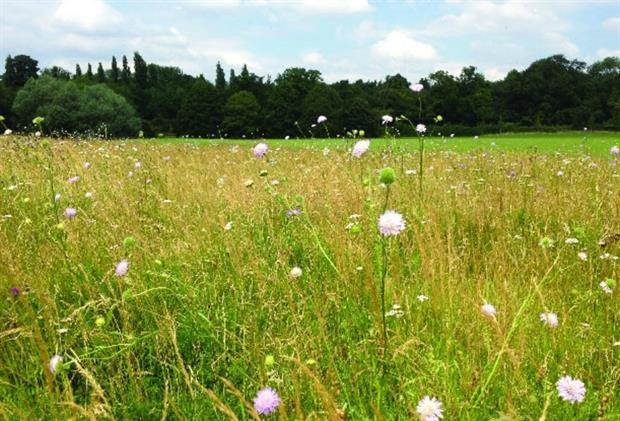 Picture: Landscape Institute