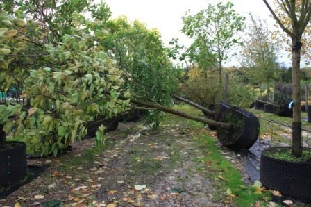 Trees down at Hertfordshire-based nursery Majestic Trees this morning