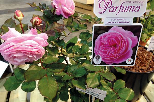 Rose Lovely Parfuma - image: HW