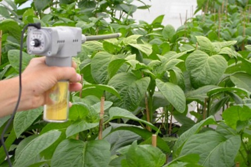 Nutrimite being applied - image:Biobest