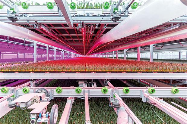 GreenPower LED: dynamic production modules allow colours to be tuned for crops - image: Phillips Lighting