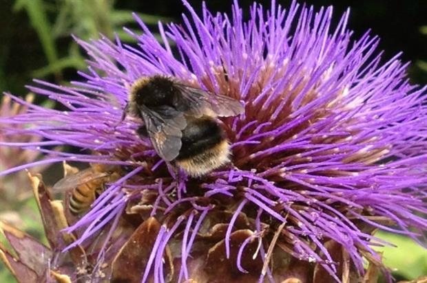 Science is split over whether using neonicotinoids harms pollinators