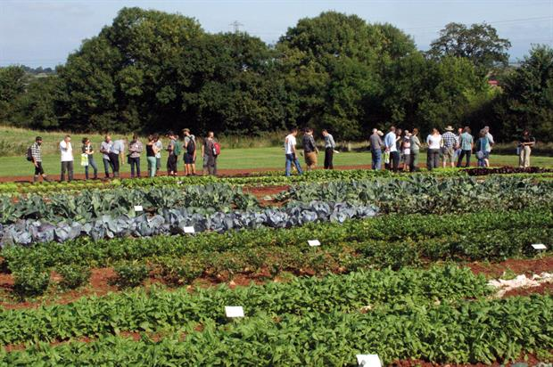 Organic Open Day: event at Huntstile Farm in Somerset was hosted by the Soil Association and Rijk Zwaan Organic - image: HW