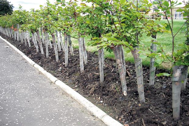 Spiral tree guards: popular choice to protect against damage from rabbits and hares - image: Green-tech