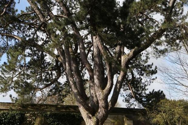 Image: Oxford University Botanic Garden