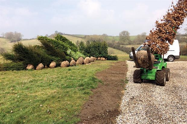 Instant impact: possible to select trees from overcrowded areas and then replant - image: The tree & hedge co