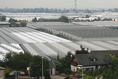 Dutch glasshouses - image:HW