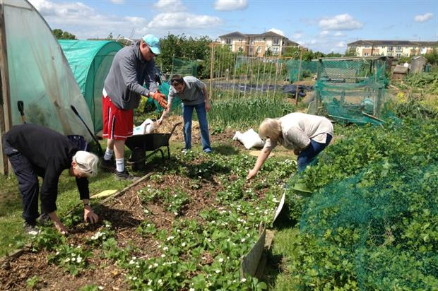 The allotment project in Chelmsford. Image: Wilderness Foundation