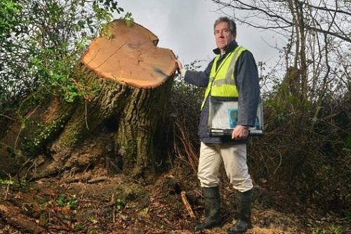 Senior tree officer Bryan Wilson - image:NFNPA