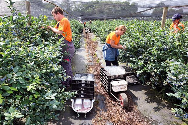 Horticulture workers: sector finding it harder to recruit seasonal staff and labour shortage looks set to intensify - image: HW
