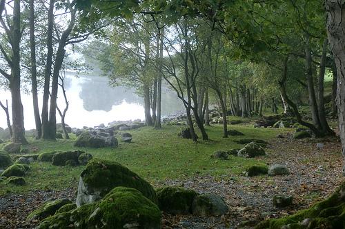 Ancient woodland - image: Emma Websdale