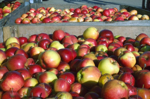 UK-grown apples - image:HW