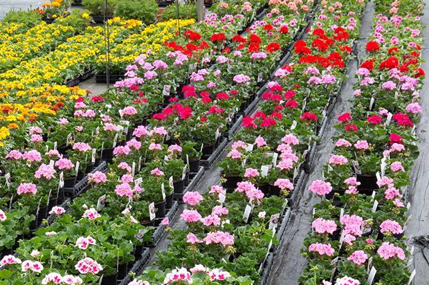 Krajowe organizacje zajmujące się uprawą róż i ich popularyzacją
