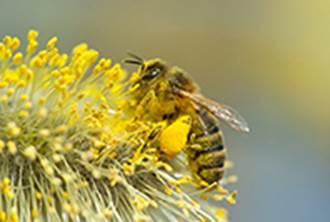 Pollinators - debate needed
