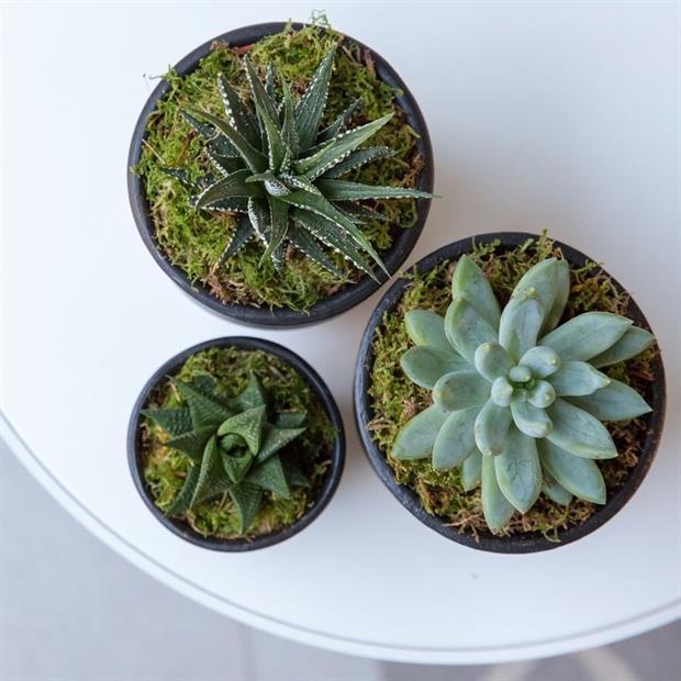 Hills Plants' nd