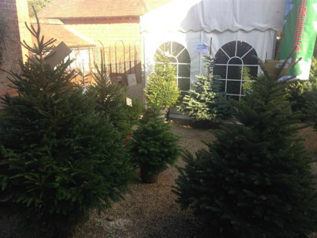 5887f0a31d4 Wyevale push UK-grown Christmas trees as selling season begins ...