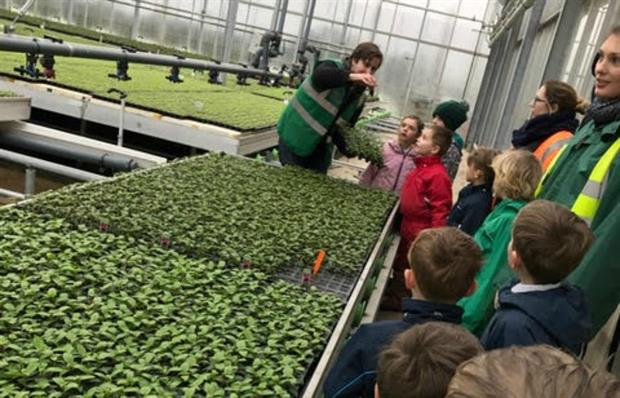 School children visit Bell Brothers Nurseries