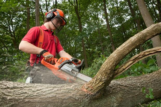 Forestry Commission apprentice
