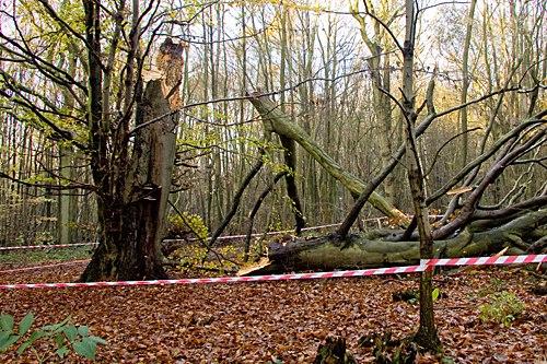 Fallen tree - image: Jack Picknell