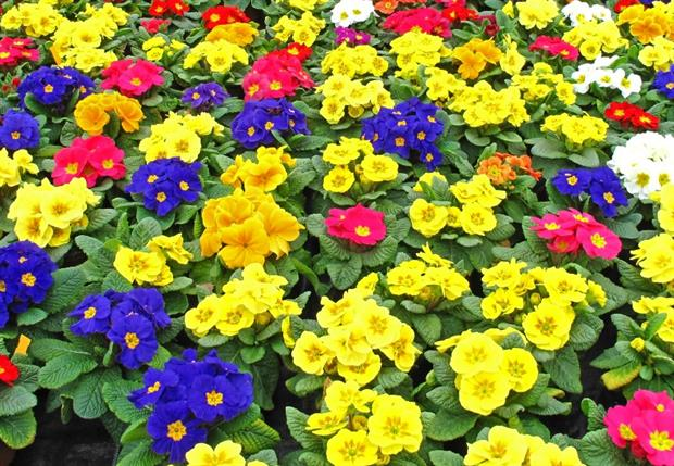 Good spring weather and larger product sees garden plant revenues up on