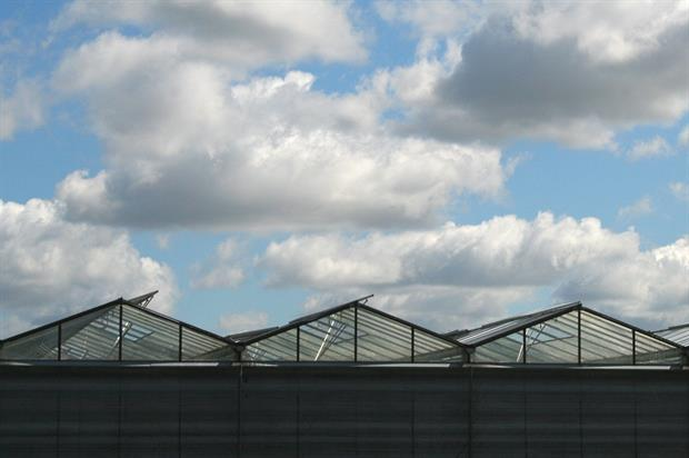Glasshouse horticulture showed a 1.5 per cent rise in area last year - image: HW