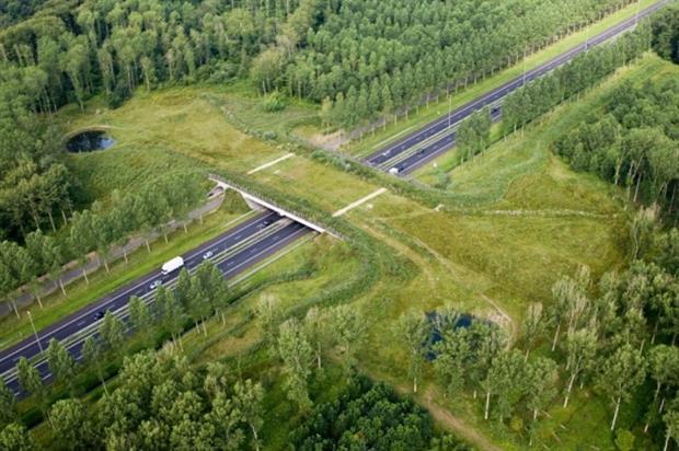 Groene Woud ecoduct in the Netherlands. Image: Rijkswaterstaat
