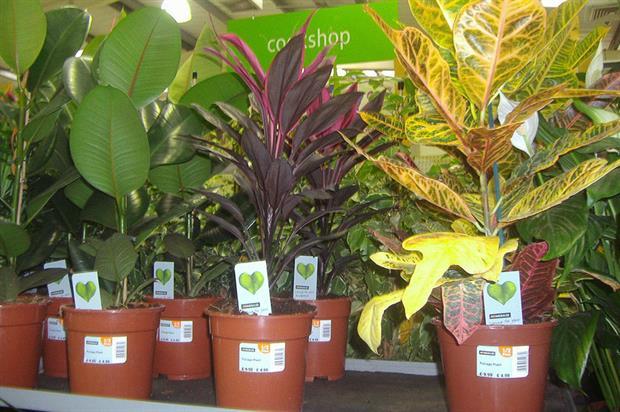 yst warns on Homebase purchase returns | Horticulture Week on amazon plants, sam's club plants, costco plants, laura ashley plants,