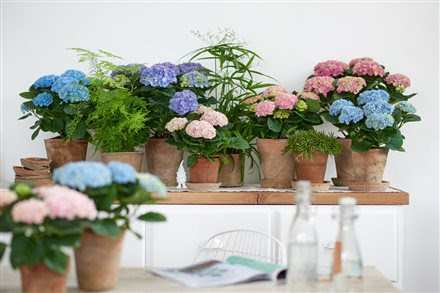 Indoor Plant Trend Drives Growing Interest In Hills Plants Magical