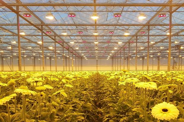LED-based grow lighting: a viable proposition for all commercially grown plant varieties