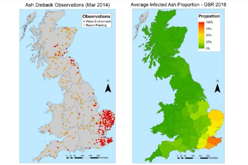 Observations and predicted incidence of Chalara in UK ash trees - image:Defra