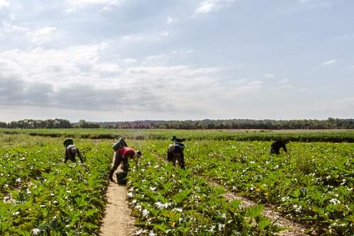 Migrant farm labourers - image: USDAgov