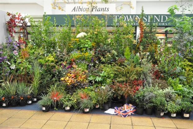Albion Plants