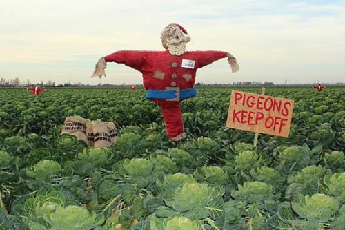 Santa-suited scarecrows - image:Tesco