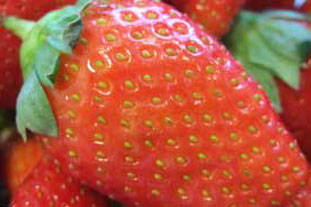 Strawberry - a protected edible