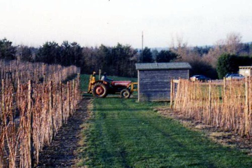 Older tractor - image: Leonora Enking