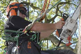 Tree working hangs from a tree in a safety harness - photo: Stihl