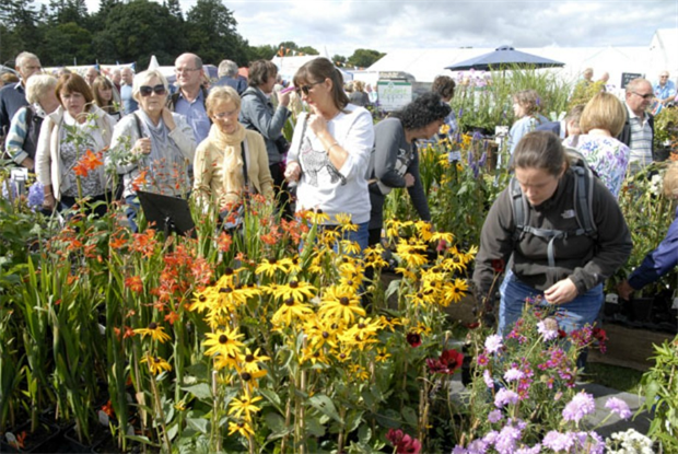 Harrogate Autumn Show