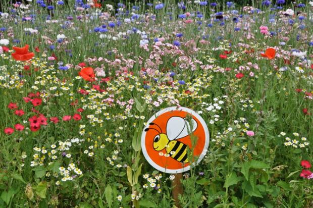 Euroflor wildflowers