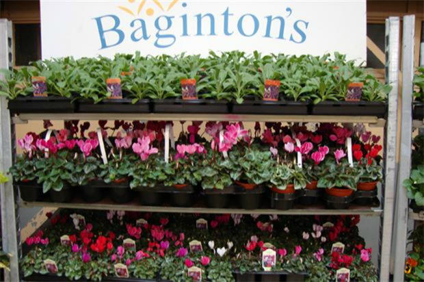 HDC bedding centre is at Baginton's