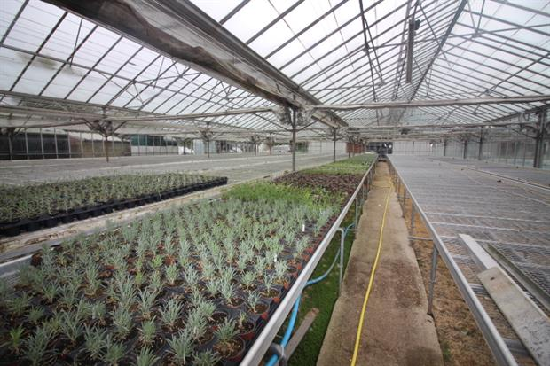 Woodcote Green Nursery Up For Sale Through Quinton Edwards | Horticulture  Week